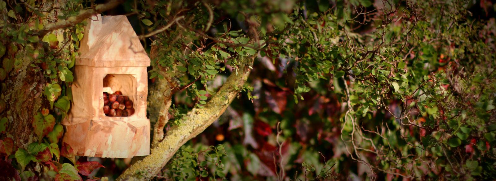 Ein Futterhaus für Eichhörnchen selbst gebaut mit Arbortech Werkzeug