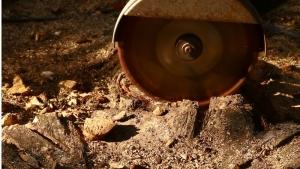 Baumstumpf mit Wurzelfräse
