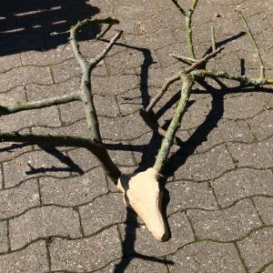 Das Hirschgeweih wird mit Arbortech Werkzeugen bearbeitet